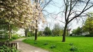 Rielpark+an+der+Frohnhauser+Straße1