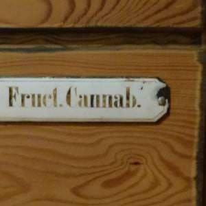 Fruct. Cannabis