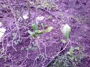 Frühblüher im eigene Garten
