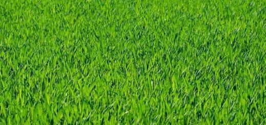 Grünflächen-Pflege